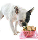 The Best Foods for French Bulldogs